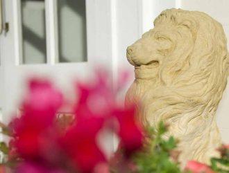 Lions1