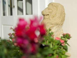 Lion-news