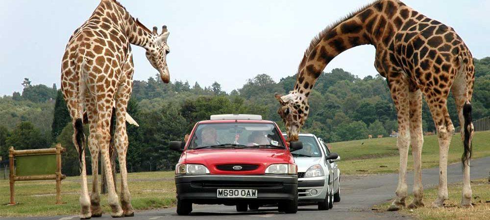West-Midland-Safari-Park