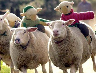 hoo-farm-animal-kingdom